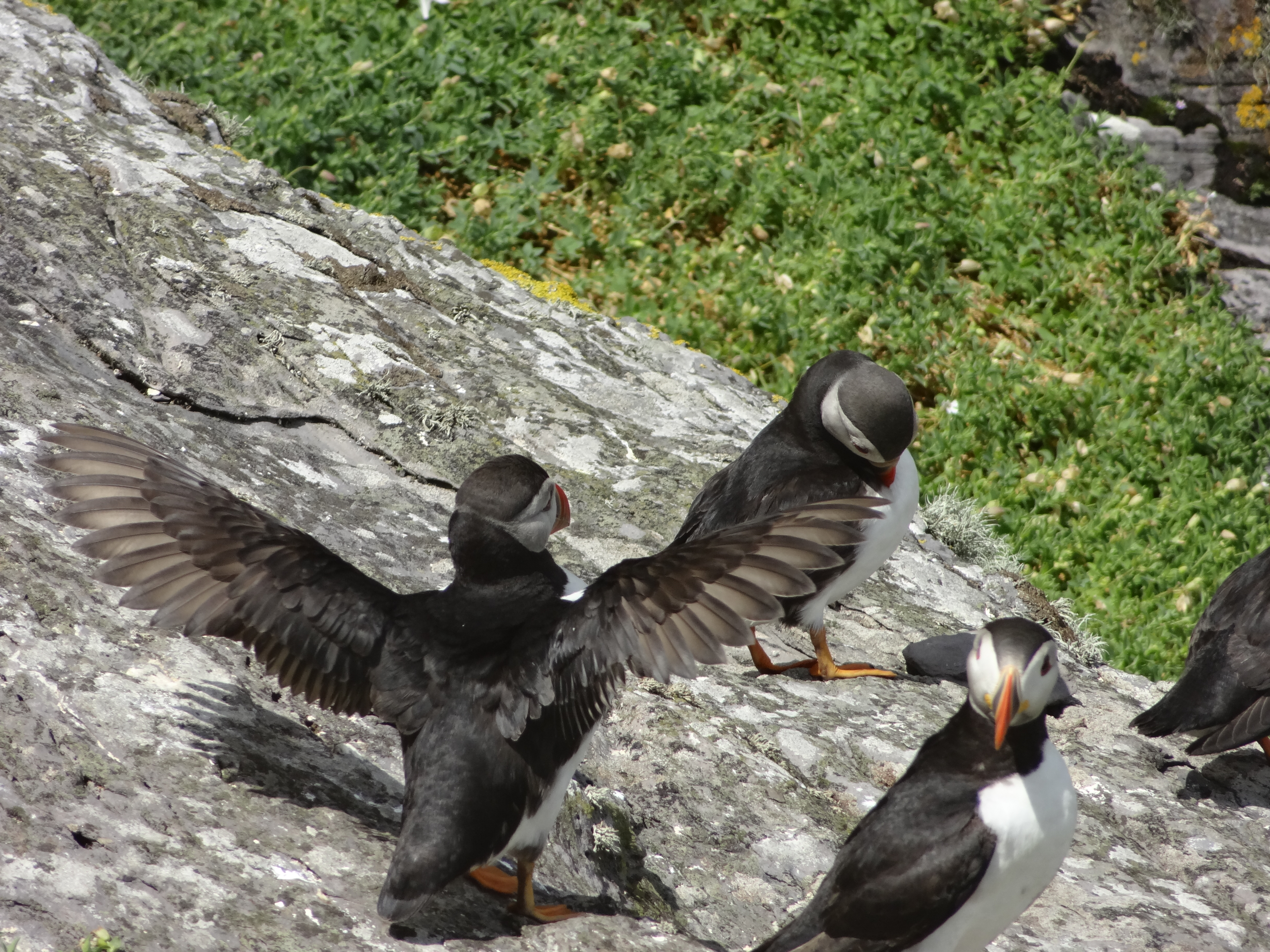 puffins and other stuff mostly harmless science
