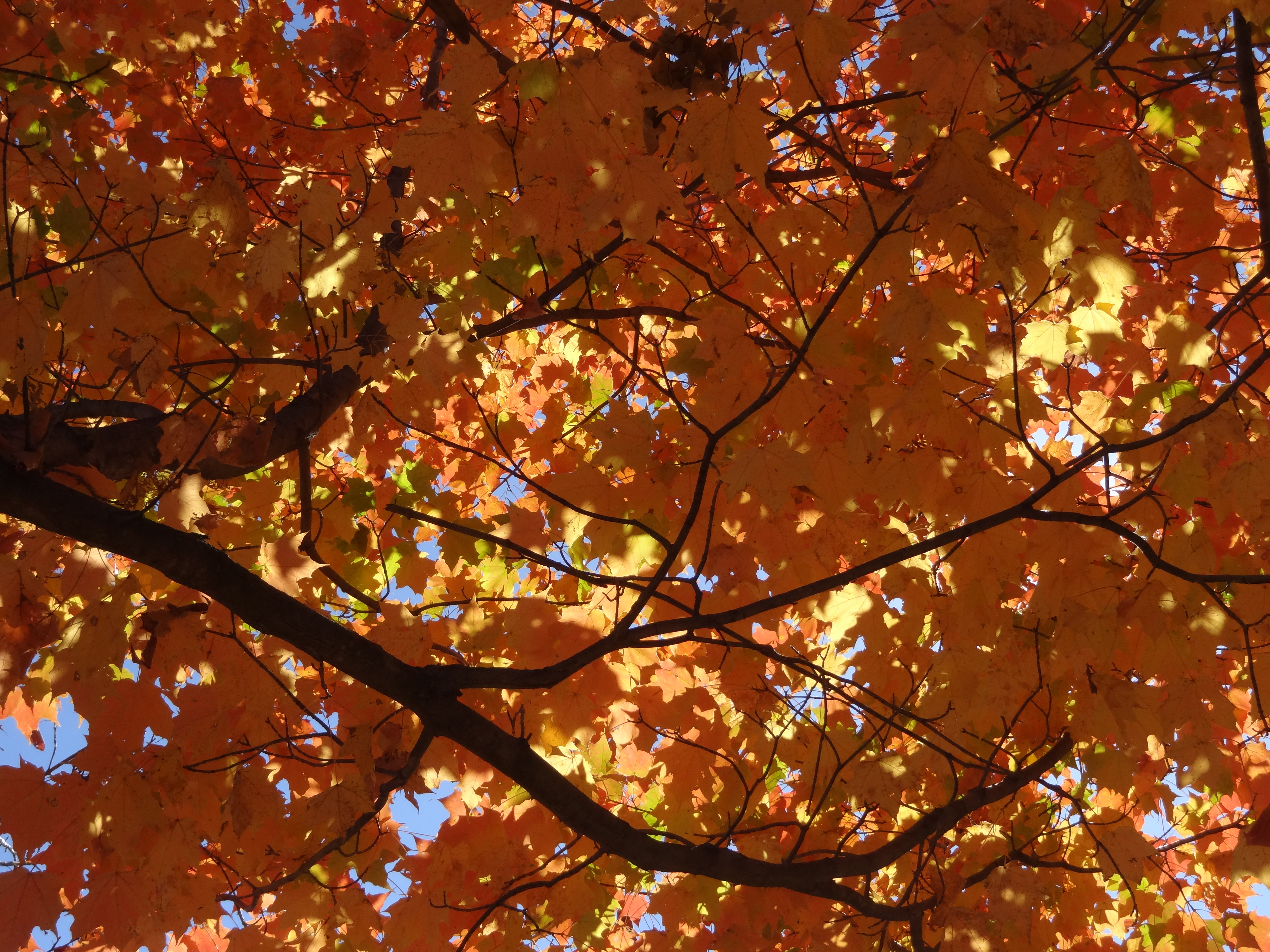 Autumn | Definition of Autumn by Merriam-Webster