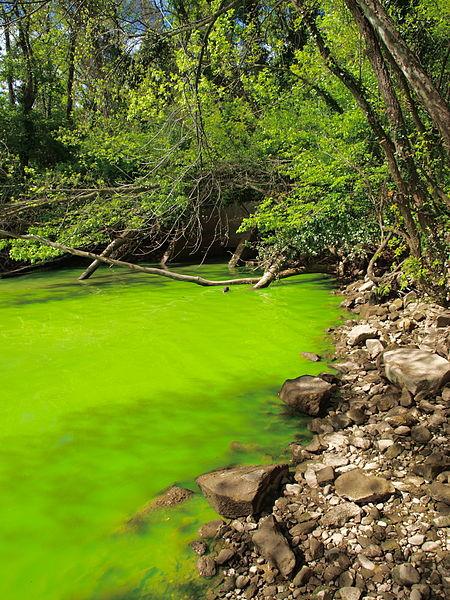 450px-Potomac_green_water