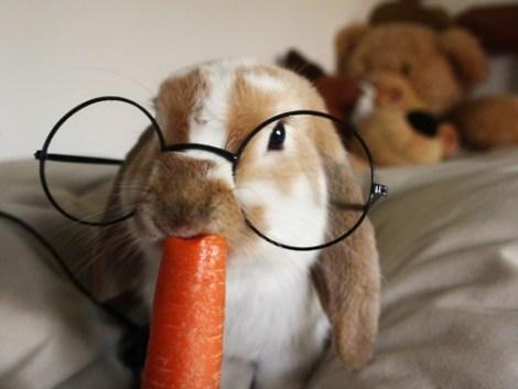 bunny-glasses-eating-carrot